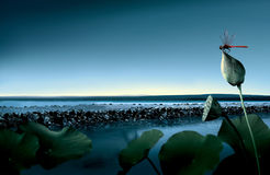 Озеро цветка лотоса Стоковые Изображения