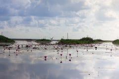 Озеро цветк лотоса в Phatthalung, Таиланде Стоковая Фотография