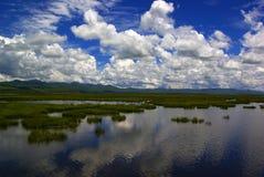Озеро цветк под пасмурным голубым небом Стоковые Изображения