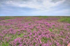 Озеро цветк Стоковое Изображение RF