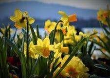 Озеро Цюрих Стоковое Изображение