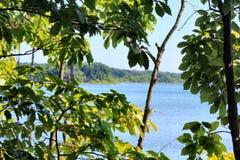 Озеро через листья Стоковые Фото