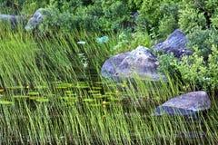озеро Швеция Стоковые Фото