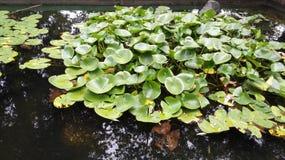 Озеро лягушк Стоковые Изображения RF