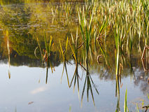 Озеро Airthrey, Стерлинг Стоковая Фотография