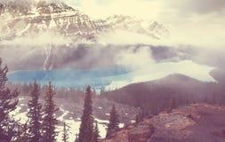 озеро alberta banff Канады обнаружило местонахождение peyto национального парка Стоковое фото RF