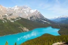 озеро alberta banff Канады обнаружило местонахождение peyto национального парка Стоковые Фотографии RF