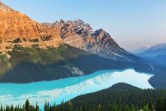 озеро alberta banff Канады обнаружило местонахождение peyto национального парка Стоковые Изображения