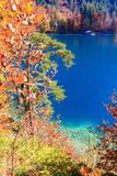 Озеро Alpsee Бавария Германия Стоковые Фото