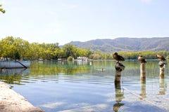 Озеро Bañola с утками, шлюпками стоковая фотография rf