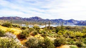 Озеро Bartlett окруженный горами и много Saguaro и другие кактусы в ландшафте пустыни Аризоны стоковое фото rf