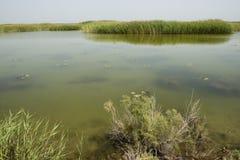 Озеро Bo Si Teng Стоковые Изображения