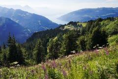 Озеро Brienz от Schynige Platte, Швейцарии Стоковые Изображения