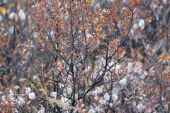 Озеро Chimpmunk смычк стоковая фотография rf
