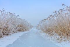 Озеро Comana в зиме стоковые изображения rf