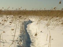 озеро footpath к Стоковое Изображение RF