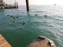 Озеро Garda утк стоковые фотографии rf