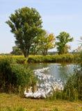 озеро gooses ближайше Стоковая Фотография