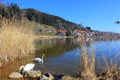 Озеро Hopfensee и деревня Hopfen стоковые фотографии rf