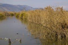 Озеро Hula - природа и живая природа Израиля парк стоковые фотографии rf