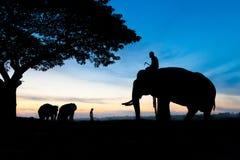озеро kariba слона сфотографировало силуэт Зимбабве Стоковое Изображение RF