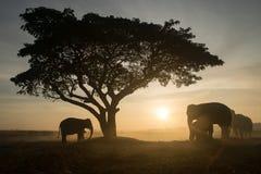 озеро kariba слона сфотографировало силуэт Зимбабве Стоковые Изображения