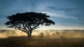 озеро kariba слона сфотографировало силуэт Зимбабве Стоковая Фотография