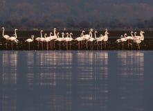 Озеро Kerkini Греция заповедник Стоковые Фото