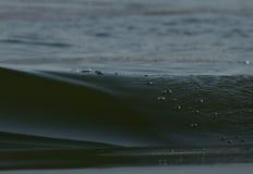 Озеро Kerkini Греция заповедник Стоковое фото RF