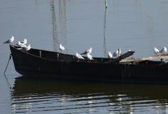 Озеро Kerkini Греция заповедник Стоковые Изображения