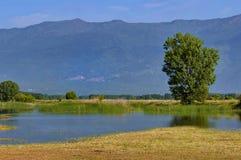 Озеро Kerkini на nord Греции Стоковая Фотография RF