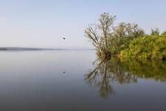 Озеро Kivu и остров крокодила стоковая фотография rf