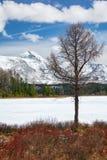 Озеро Kodelyukyol Altai Стоковые Фото