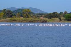 Озеро Korission очень важная экосистема Корфу, где много перелетных птиц как розовые фламинго останавливают стоковые фото