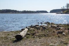 Озеро Ladoga в Karelia Стоковое Фото