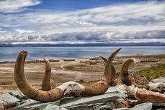 Озеро Manasarovar Стоковое Изображение