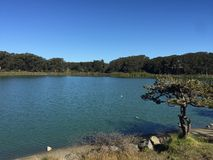 Озеро Merced Сан-Франциско Стоковая Фотография RF