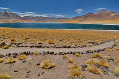 Озеро Miscanti или Laguna Miscanti Национальный заповедник фламенко Лос Область Антофагасты Чили Стоковое Фото