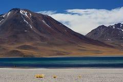 Озеро Miscanti или Laguna Miscanti Национальный заповедник фламенко Лос Область Антофагасты Чили Стоковое фото RF
