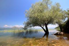 озеро montenegro skadar Сони dsc Балканов самое большое Стоковое Фото