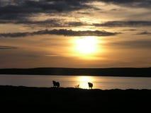 Озеро Myvatn Стоковое фото RF