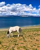Озеро Nam и лошадь Стоковые Фото