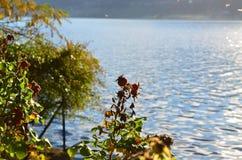 Озеро Orta, положение Pettenasco Стоковое Изображение RF