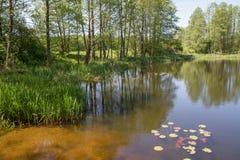 Озеро Oxbow стоковая фотография