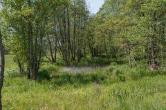 Озеро Oxbow стоковое фото rf