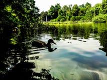 Озеро Parco Sempione в милане стоковые фотографии rf