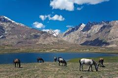 Озеро PenziLa около пропуска PenziLa, Zanskar, Ladakh, Джамму и Кашмир, Индии Стоковые Изображения