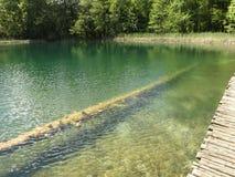 Озеро Plitvice Стоковые Изображения