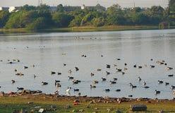 Озеро Randarda, Rajkot Стоковая Фотография RF