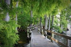 Озеро Reelfoot Стоковые Изображения